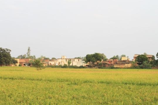 Jahangirpur, UP—India