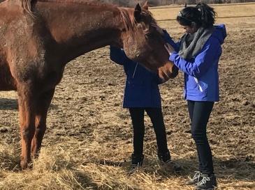 Horse meet 3 small